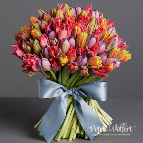 Tulip Wild, kytica tulipánov